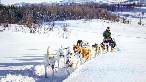 노르웨이 개썰매 알래스칸허스키