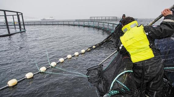노르웨이 연어 연어양식장