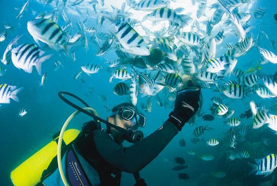 필리핀 엘니도 바다에서 스쿠버다이빙