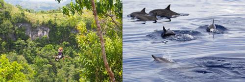 다나오 에코 어드벤처 공원, 돌고래 투어