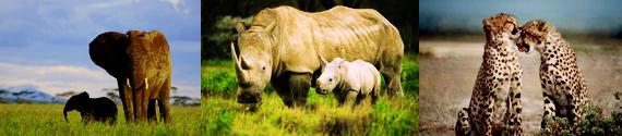 코끼리, 코뿔소, 표범