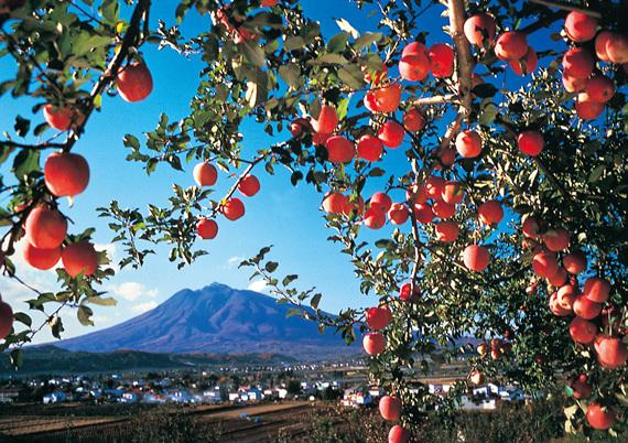 사과와 이와키산