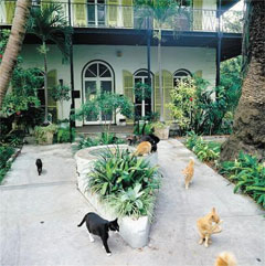 고양이가 한가로이 노니는'헤밍웨이 홈 앤 뮤지엄'