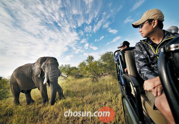 9인승 지프 뒤로 아프리카코끼리가 나타났다. 민첩하게 고개를 돌린다.