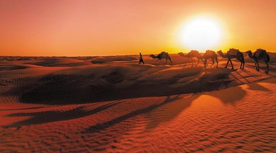 튀니지의 사하라사막에서 만난 낙타 행렬. 이들을 제외하고 고요함에 빠질 땐 마치 낯선 행성에 온 듯하다.