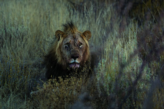 아직도 태고적 생활양식에 따라 살아가는 부시맨의 마을, 야생 타조와 사자는 물론이고 물에 발 담그러 가다가 물 속에서 먹이를 기다리는 악어와 눈이 마주치는 경험도 할 수 있다.